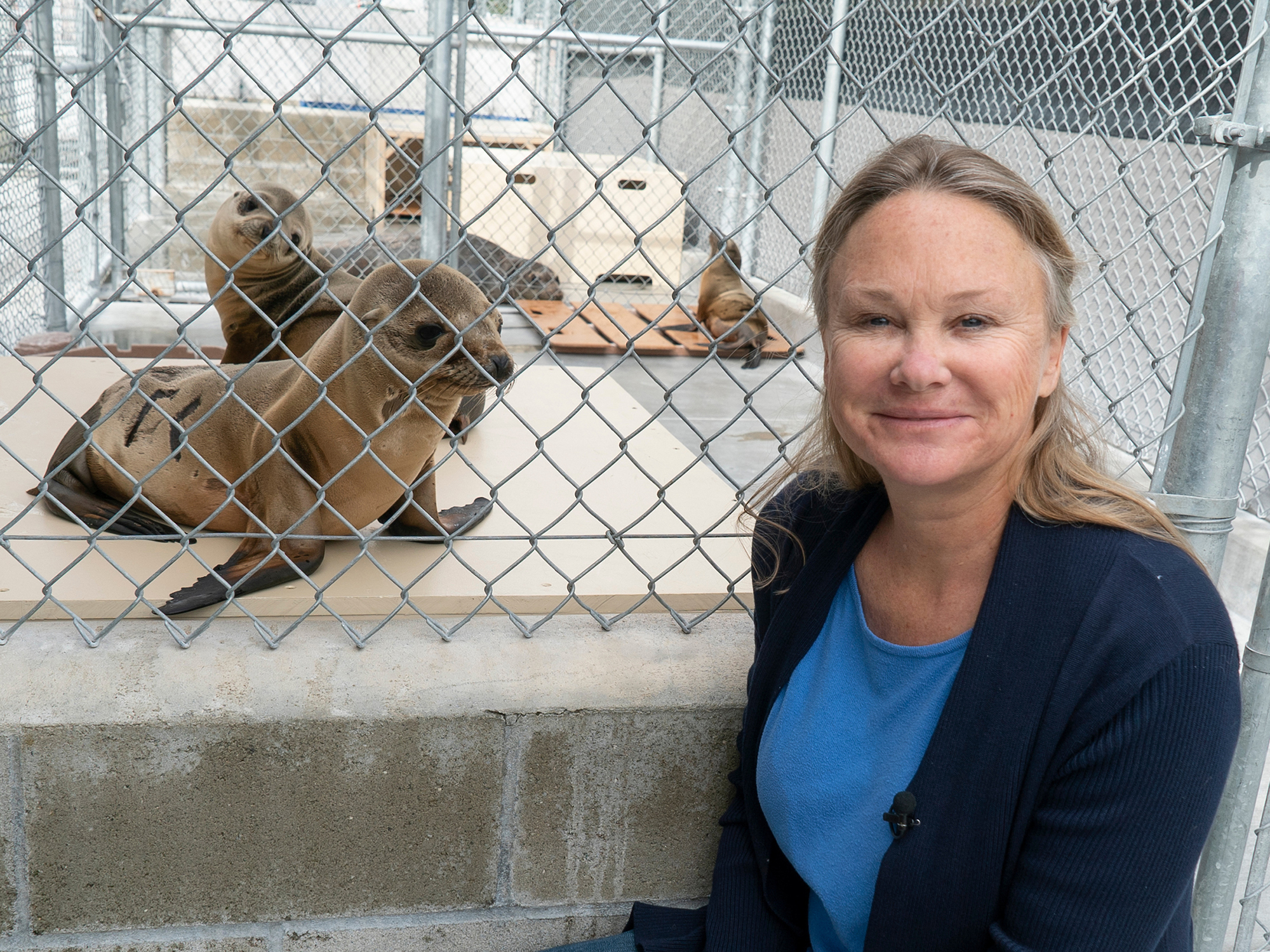 university of iowa alumna lauren palmer rehabilitates seals as part of her work with marine mammals
