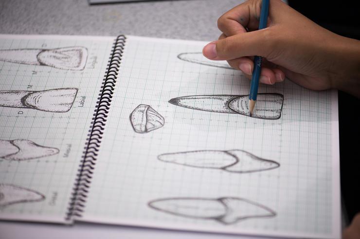 A dental student sketches teeth.